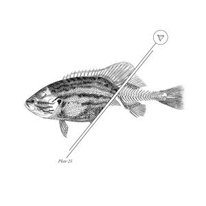 pescsdo-mitad